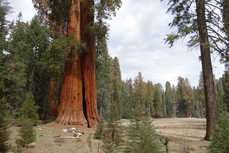 USA Giant Forrest Sequoia Grove